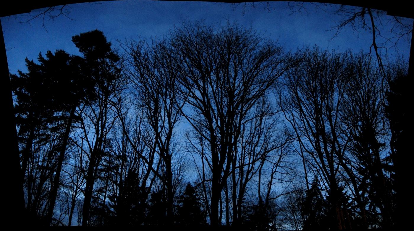 bare trees at dusk
