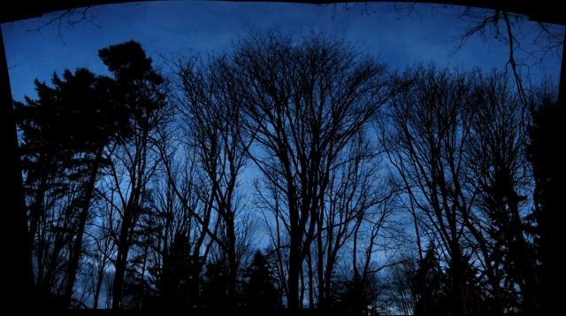 Bare Trees At Dusk
